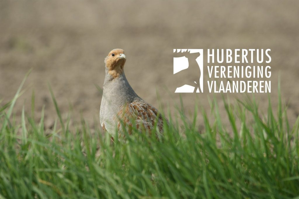 Peiling: jacht in Vlaanderen geniet ruime steun